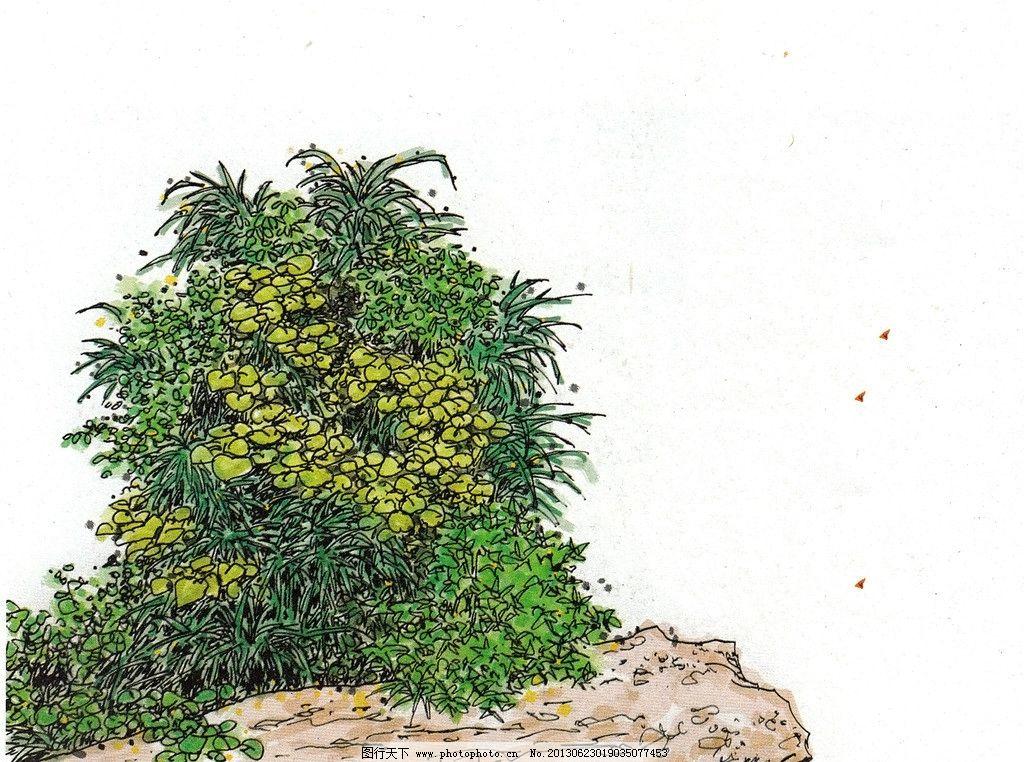 景观树 树 绿树 树丛 室外景观树 手绘树 景观树木 水彩植物 水彩手绘
