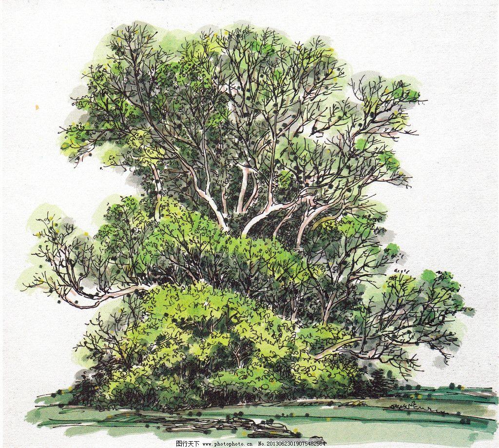 景观树 风景树 风景画 水彩风景 环艺风景 水彩画 硬笔淡彩 钢笔水彩