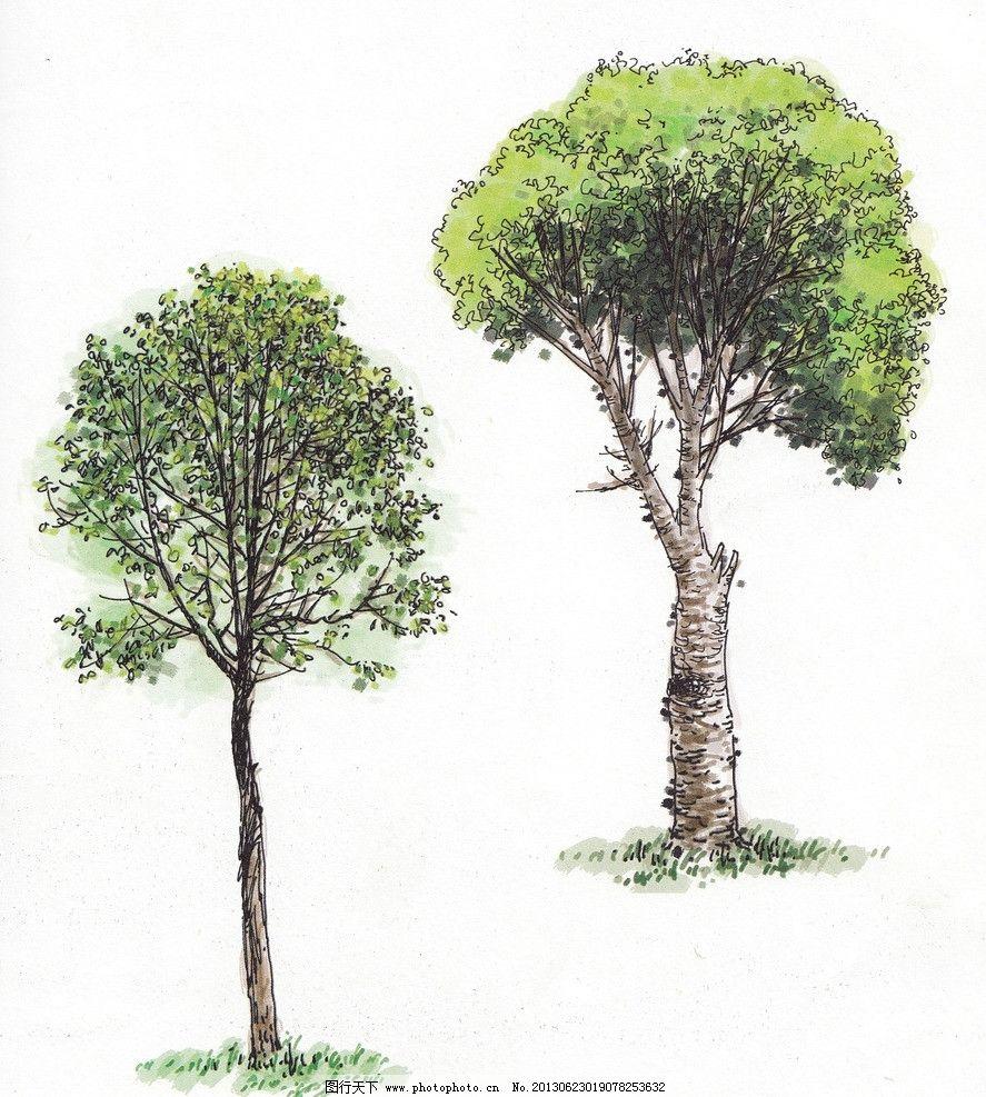 景观树 树 绿树 室外景观树