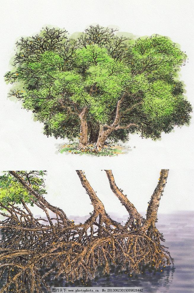 室外景观树 手绘树 景观树木 水彩植物 水彩手绘 硬笔淡彩 钢笔画彩绘