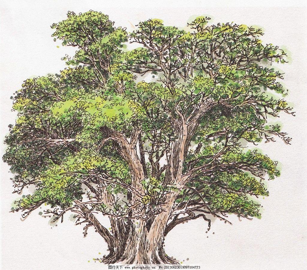 大树 树 绿树 景观树 绿化树 室外景观树 手绘树 景观树木 水彩植物