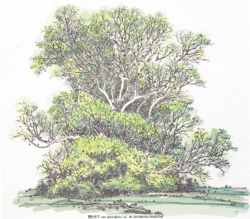 景观树 风景画 风景树 钢笔画 绘画书法 绿化树木 树林 景观树设计
