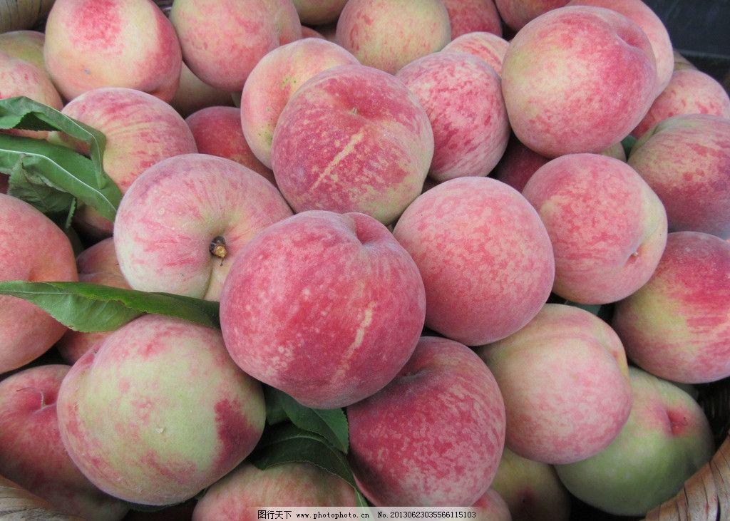 水蜜桃 桃子图片素材下载 桃子 桃子树 桃园 硕果 桃红 水果 生物世界