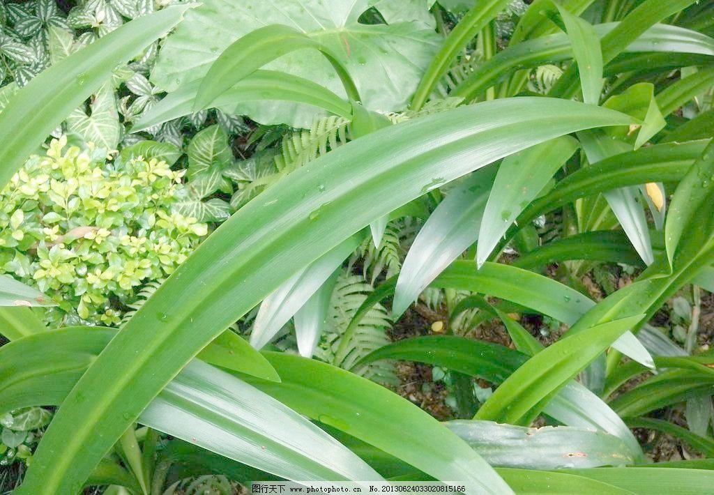 清新 设计 绿叶图片素材下载 绿叶 水滴 水珠 叶子 雨后 自然 植物