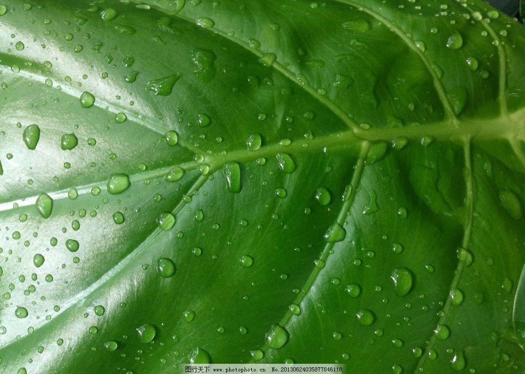 叶子水滴图片