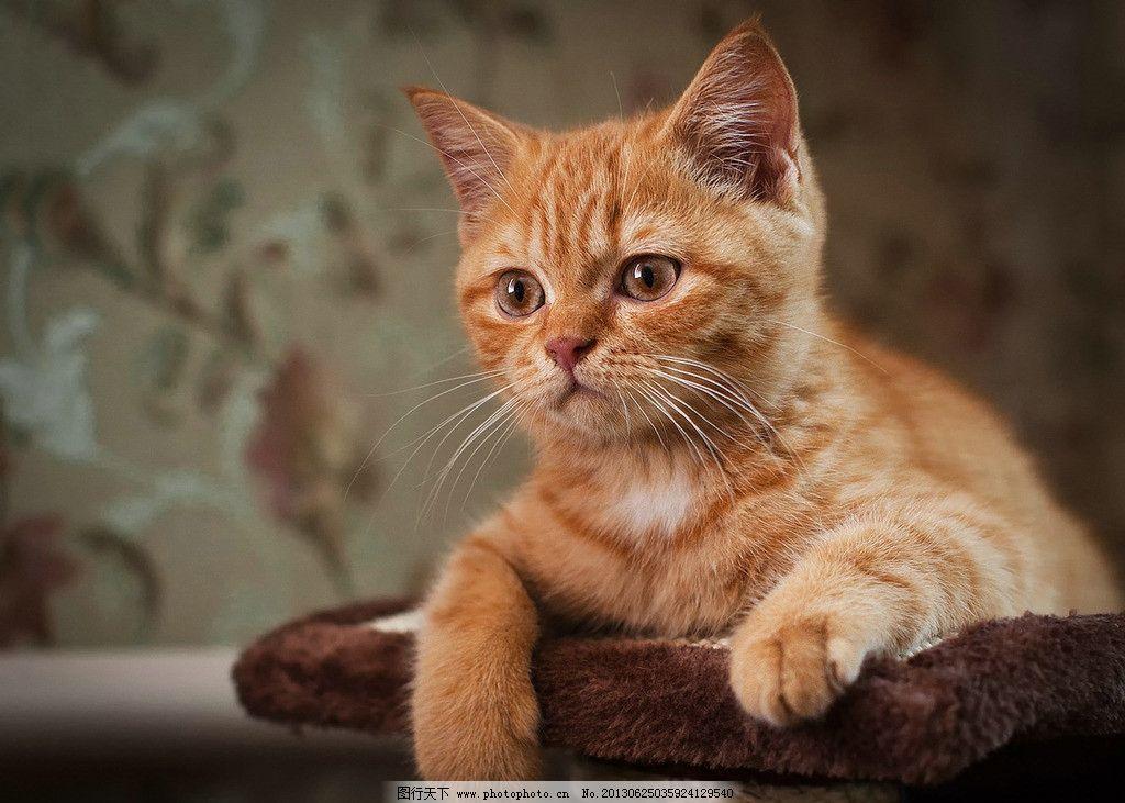 小花猫 好奇 可爱 动物 超萌 家禽家畜 生物世界 摄影 72dpi jpg