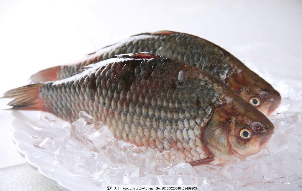 江鲫鱼图片