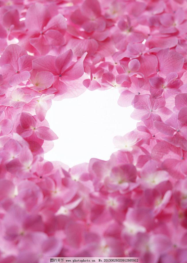 粉色鲜花手机壁纸