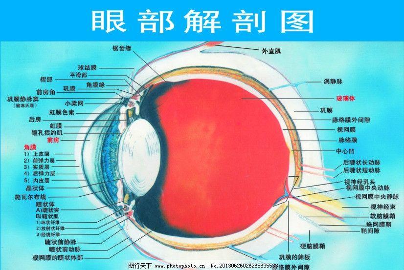 眼睛解剖图