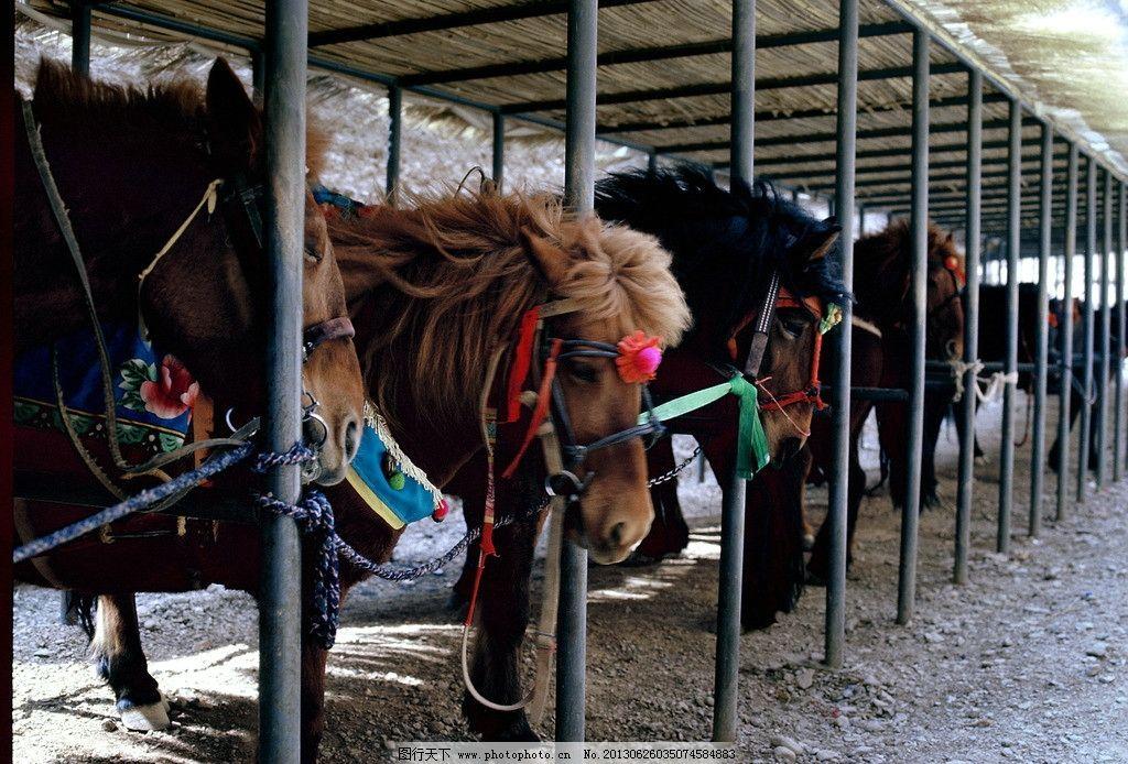 黄河石林观光坐骑 黄河石林 甘肃景泰 马 马厩 观光坐骑 野生动物