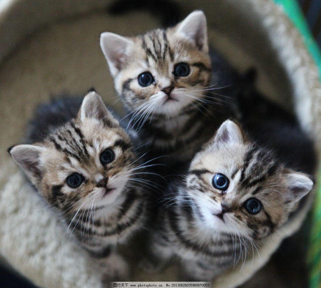 花猫戴帽子可爱图片