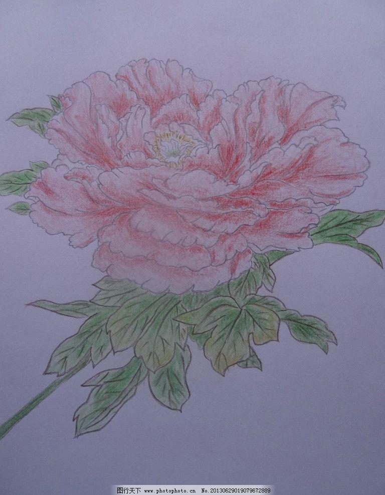牡丹 彩色铅笔 花鸟 手绘 绘画 美术 绘画书法 文化艺术 设计 350dpi