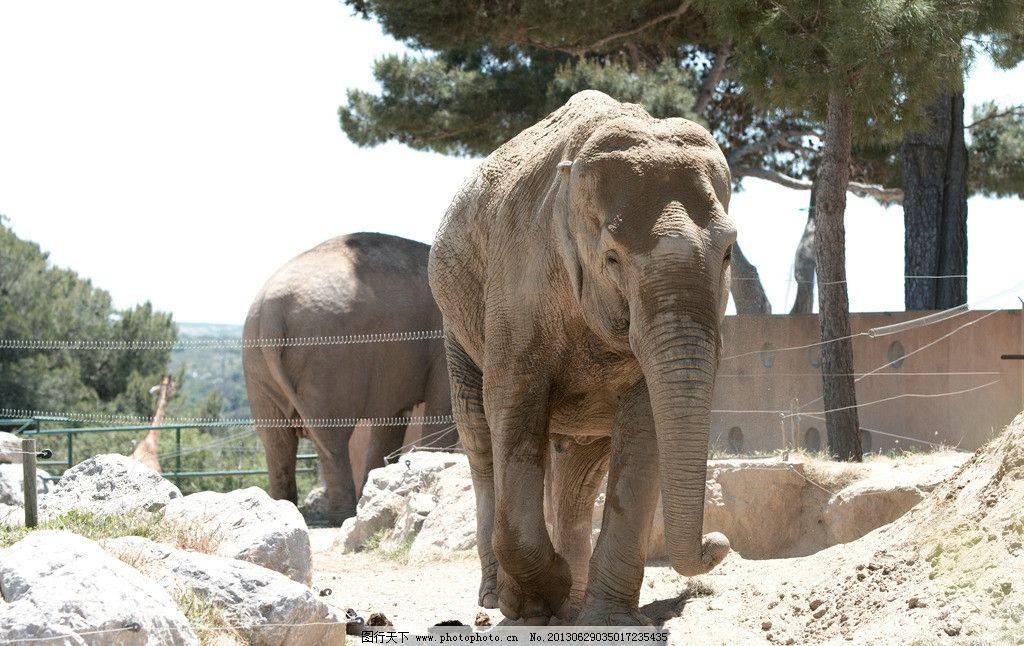 大象 动物 生物 动物园 哺乳动物 摄影 动物世界 正面 野生动物 生物