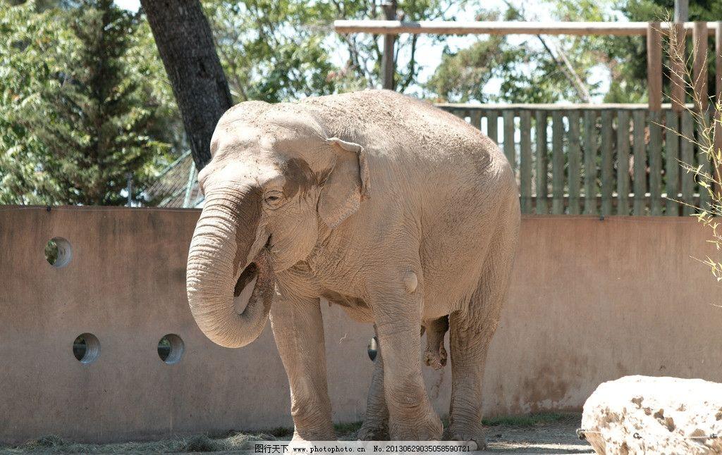 大象 动物 生物 动物园 哺乳动物 摄影 动物世界 野生动物 生物世界