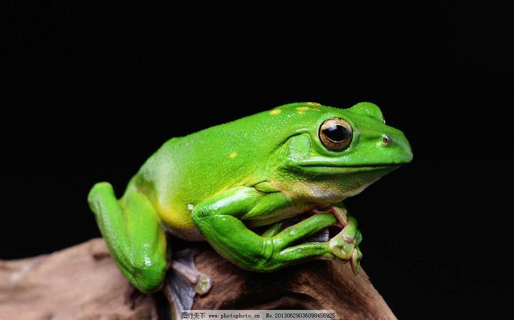 青蛙 动物 绿色 黑色 树杆 其他生物 生物世界 摄影 350dpi jpg