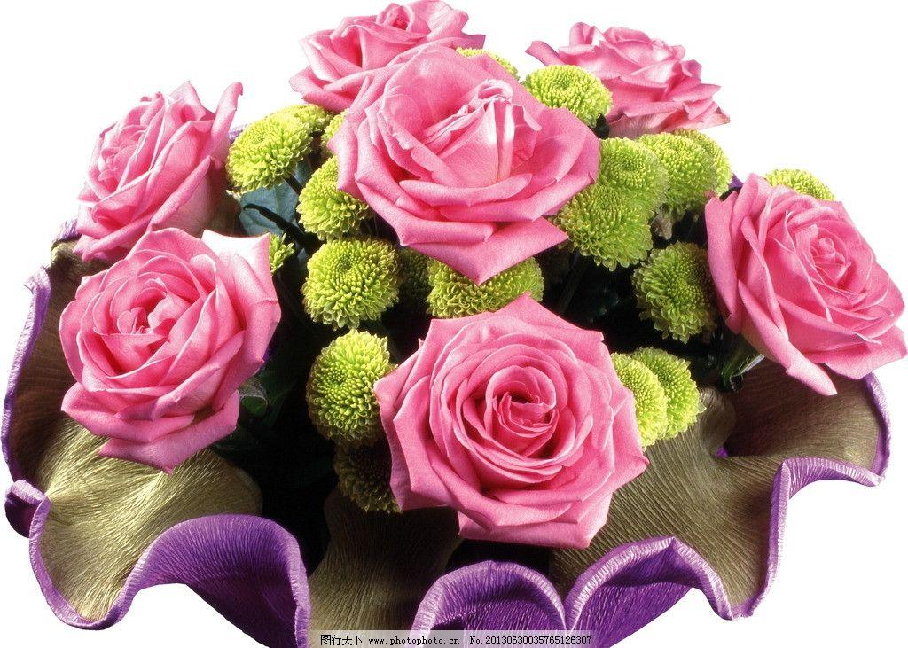 玫瑰 玫瑰花 鲜花 花朵 花 花草 花卉 生物世界 摄影 72dpi jpg图片